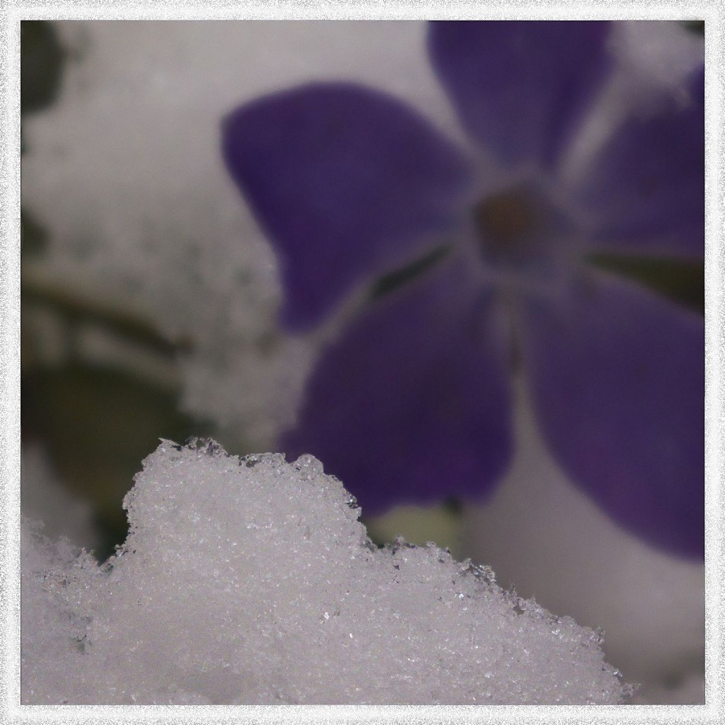 Flowers and Snow